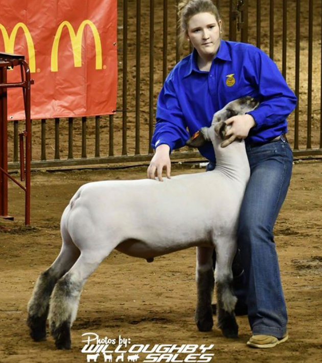 Class Winner - 2018 Oklahoma Youth Expo Sire: Ali (Barely Legal son)Dam:  WH 5-184 (WH 8-075 line)Showman:  Bree Elliott FULL SIB TO LIGHTS OUT