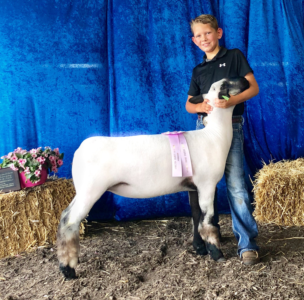 Reserve Grand - 2018 Hamilton County Fair (Indiana) Sire: AtlasDam:  WH 5-138 (Pure Power daughter)Showman:  Jackson Ritter