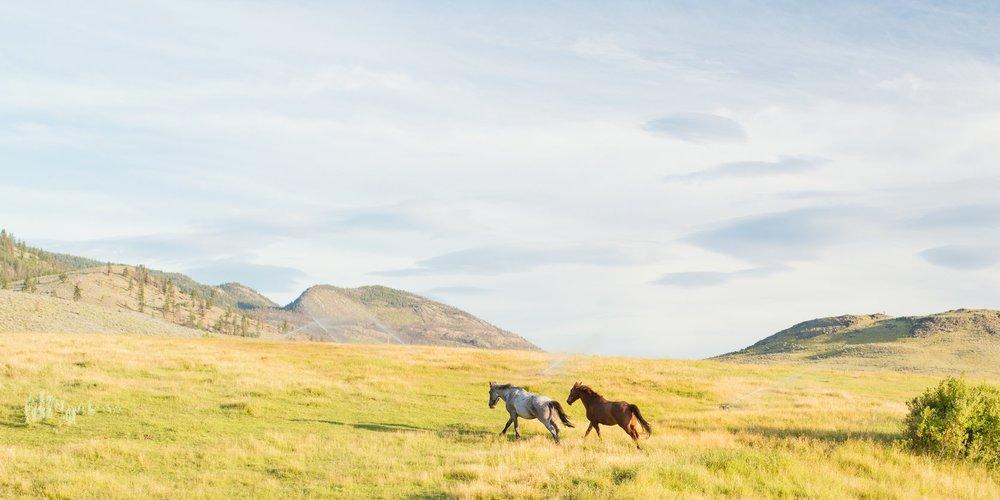 Copy of Sundance Ranch Soulful Entrepreneur Retreat - horses
