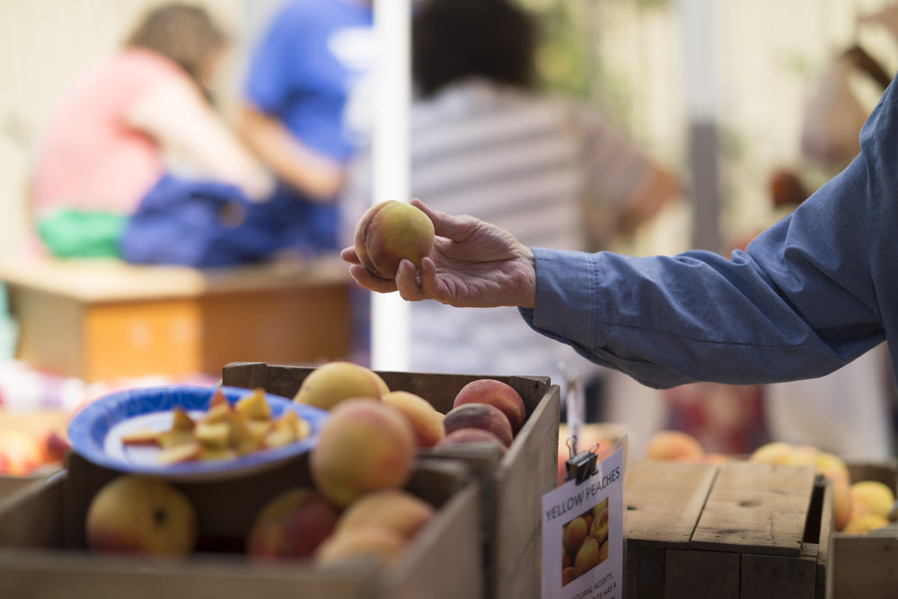 Pop Up Food Hub - Innovation for local food distribution