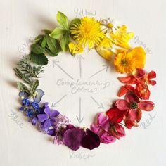 flower color wheel.jpg