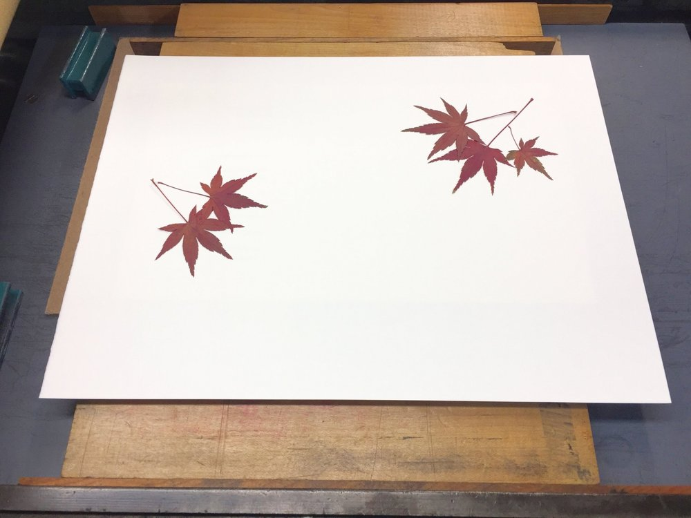 Next, with a pair of tweezers I carefully picked up a leaf by its stem from the ink plate and placed it where I wanted on the book page. Sometimes I overlapped leaves, which created a sense of depth in the final print.