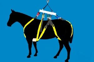 Horse — Large Animal Lift