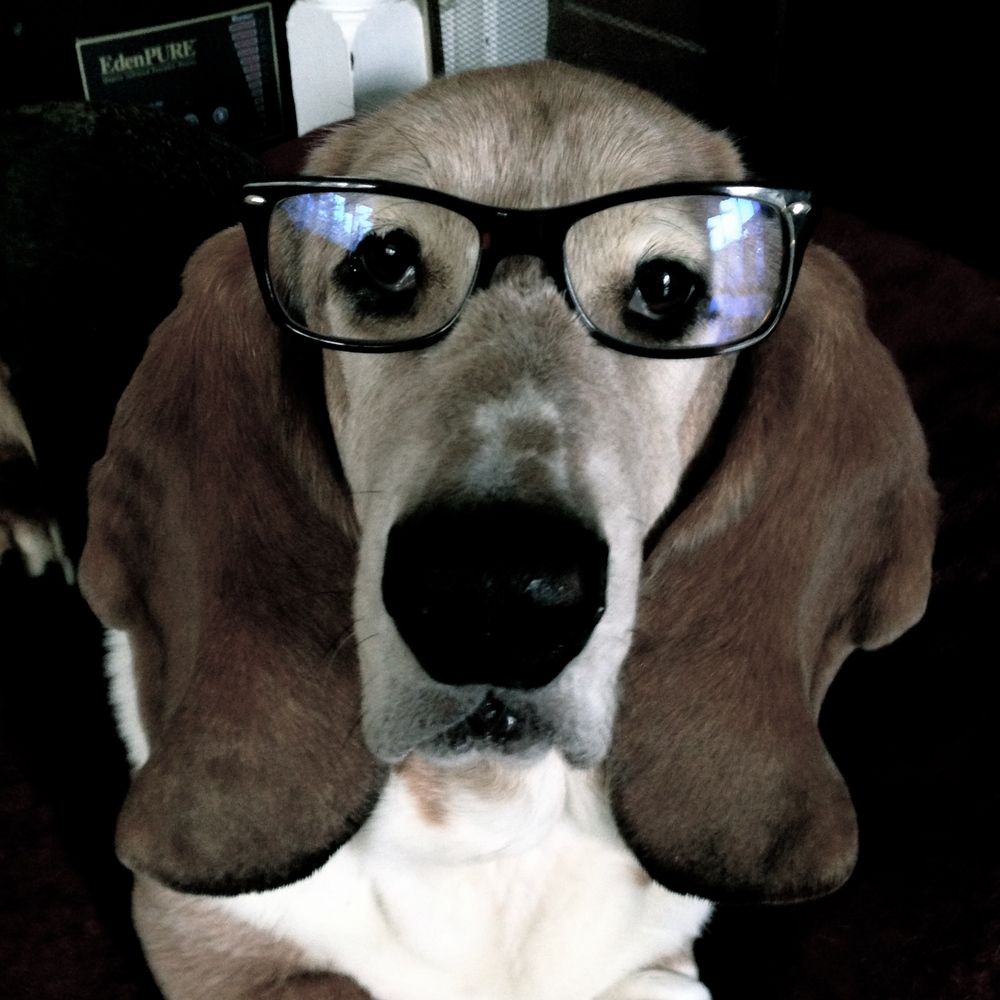 I measure what's in my food dish. And the number of times my owners make me wear human things. Like football jerseys and glasses...