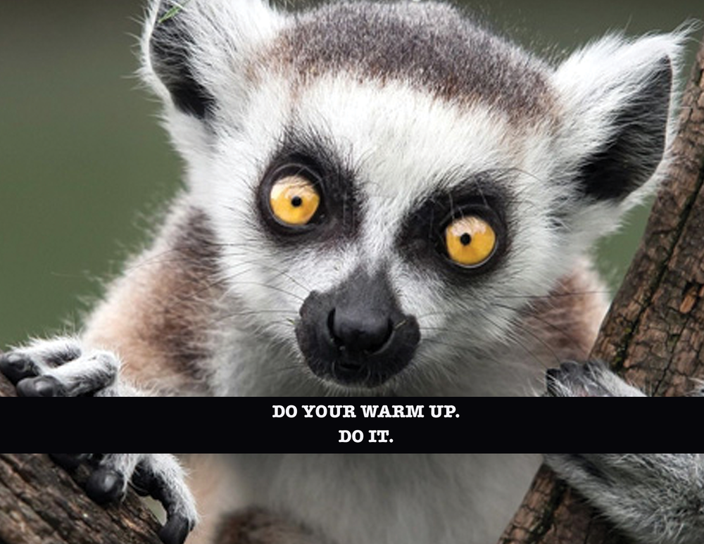 I don't know if lemurs warm up before they work out, but they're awfully cute.