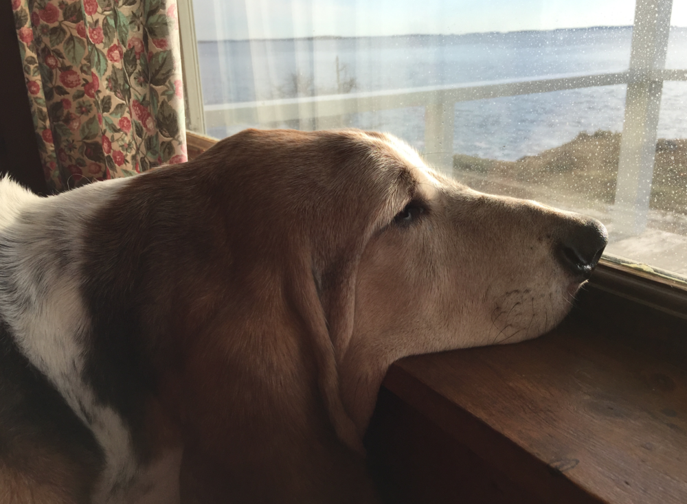 Don't settle. Unless it's settling your chin on a window sill to watch the ocean waves.