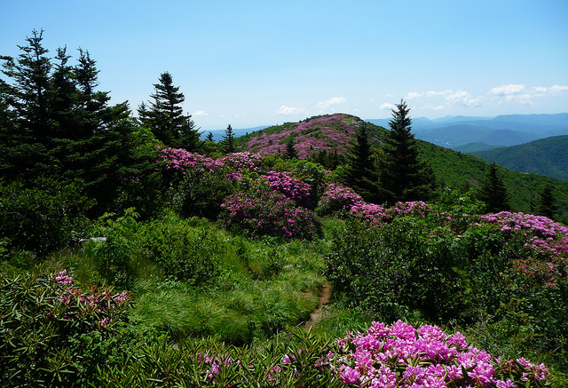The Rhododendron Festival in Bakersville is a fun event. Roan Mountain is stunning any time of year!