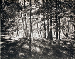 April Gornik, Forest Light, 2009, charcoal on paper, 24x30 inches