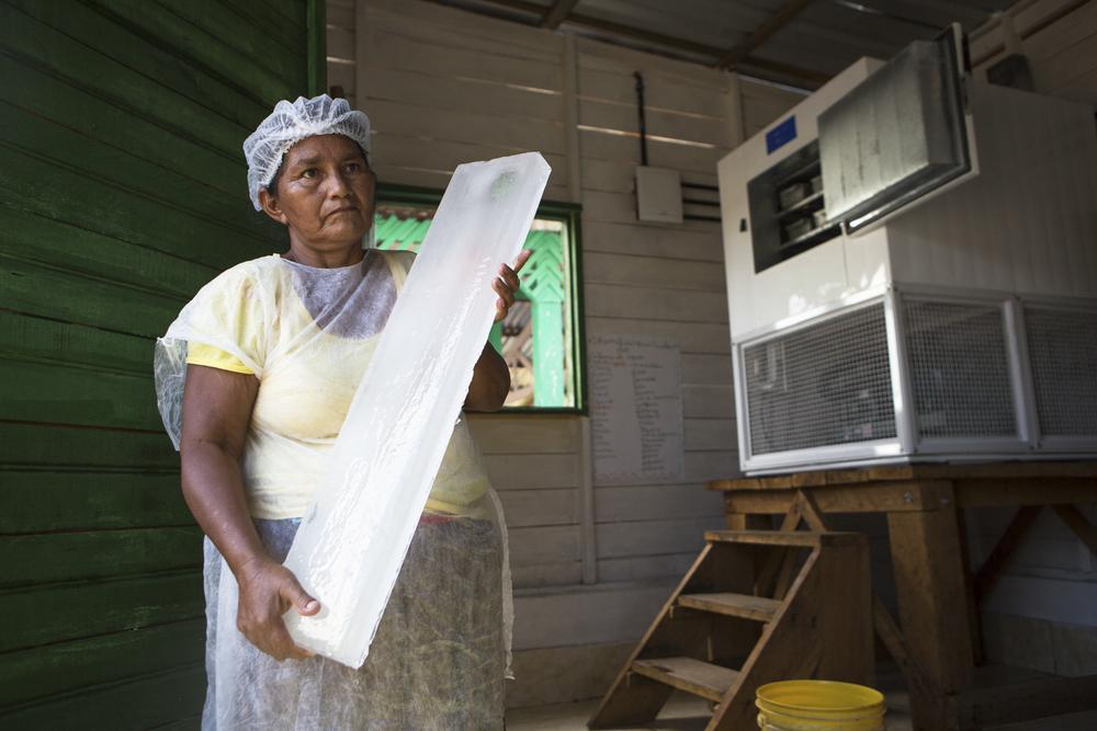 Mamirauá, AM, 27 de outubro de 2015 - Lucimar mostra o esquema de revezamento semanal para cuidar da máquina de gelo. A cada semana, uma família fica responsável por abastece-la e retirar a os blocos de gelo. (©Greenpeace/Otávio Almeida)