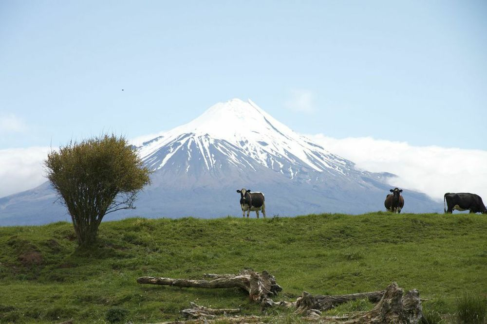 Dairy farming landscape under Mt Taranaki