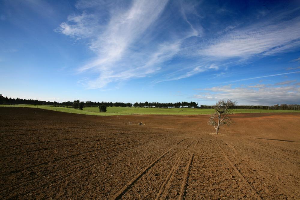 Sown paddock