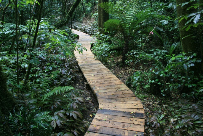Simon Collins - Rotokare walkway 2009-2010 300m of new boardwalk constructed orignal3.jpg