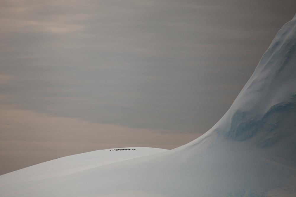 24_Icebergs_140122.jpg