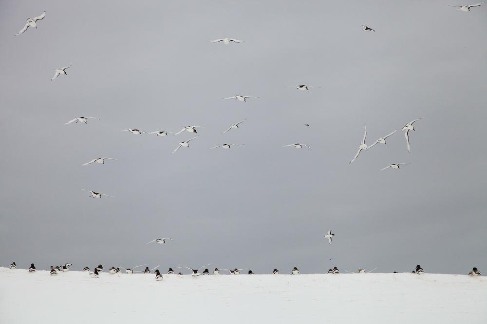 07_Antarctica_130124.jpg