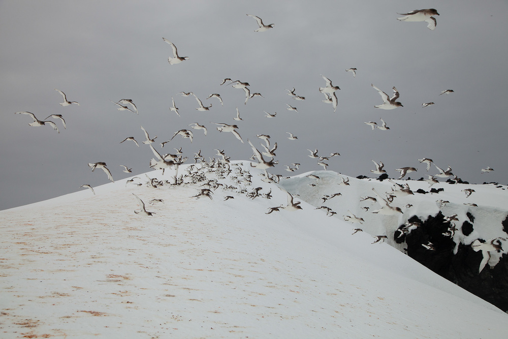 08_Antarctica_130124.jpg