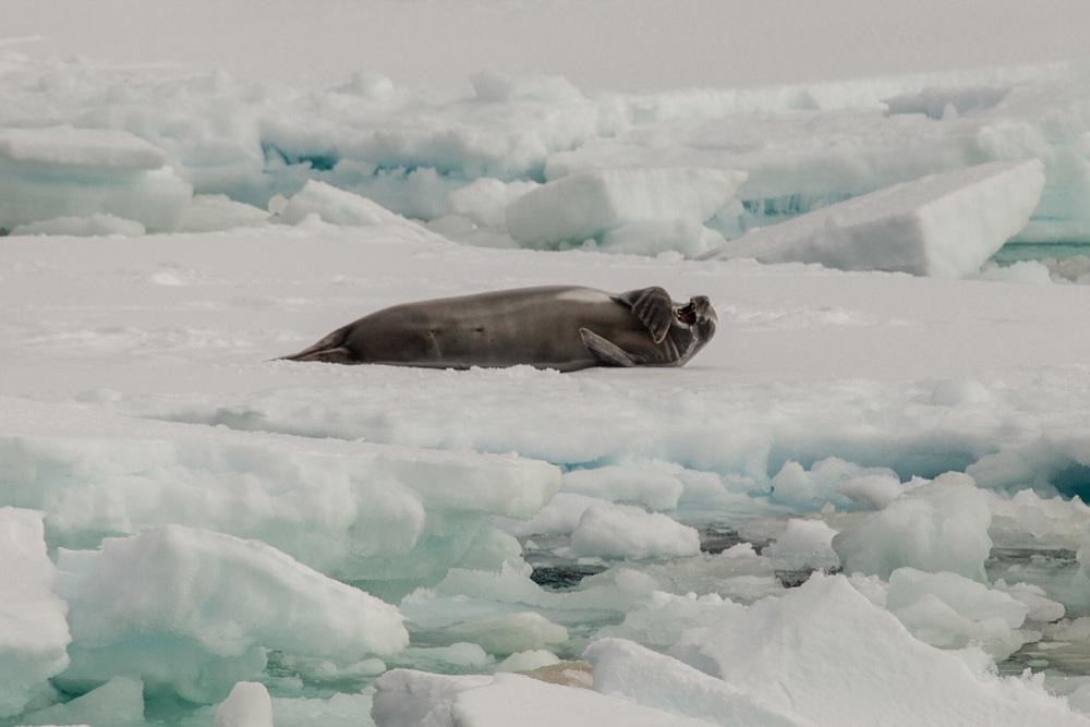 09_Antarctica_140219.jpg