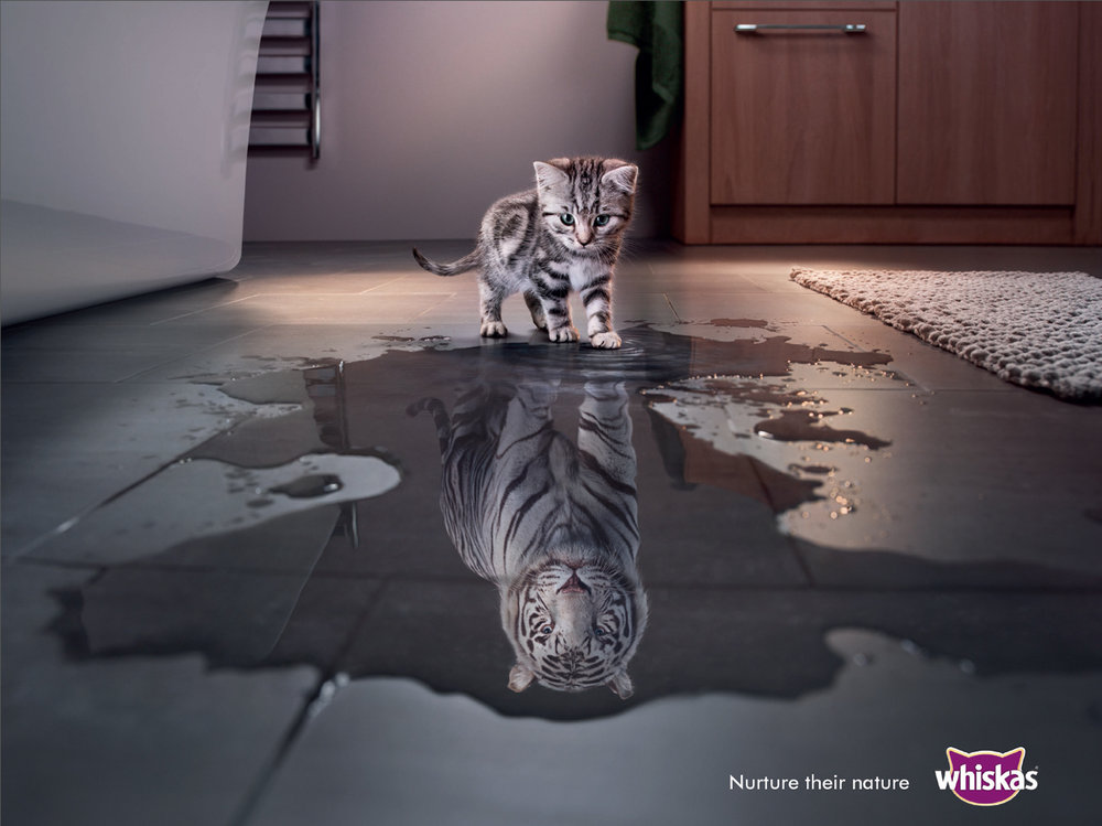 Whiskas global campaign