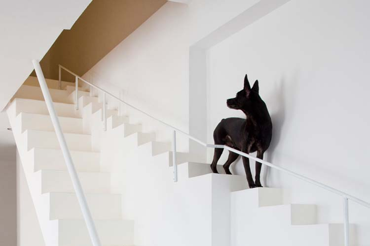 pet-friendly-interior-design-3.jpg