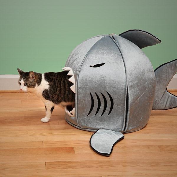 casa-gatos.jpg