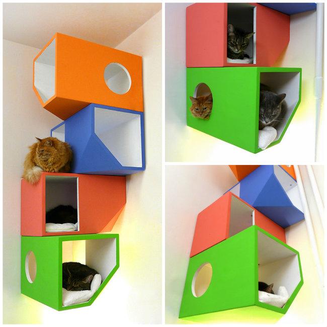 catissa-colores-casa-gatos (1).jpg