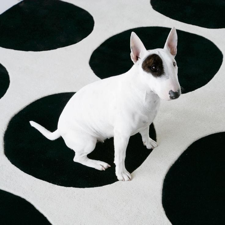 Alfombra perro.jpg