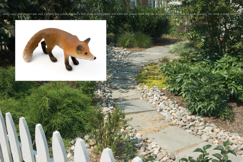 Flora & Fauna: Fox