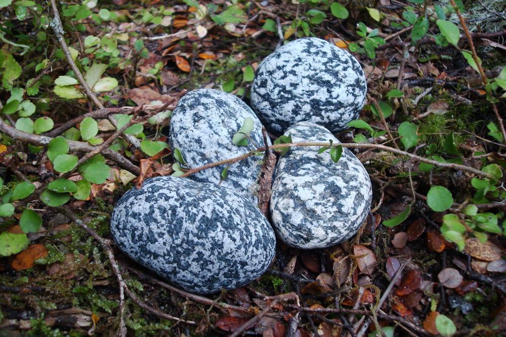 One Life - Rocks