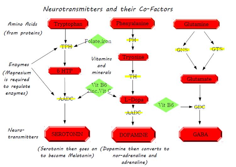 Neurotransmitters and cofactors.png