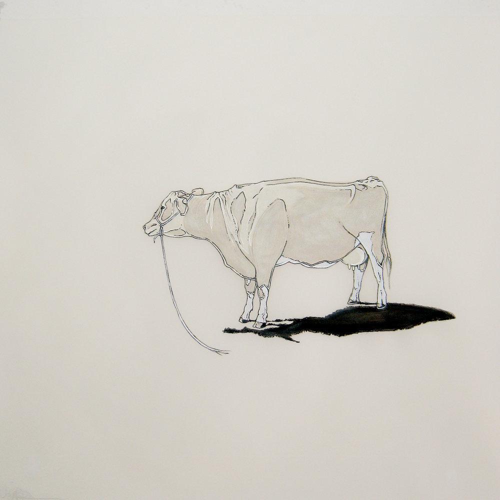 vaca perdida, 2012