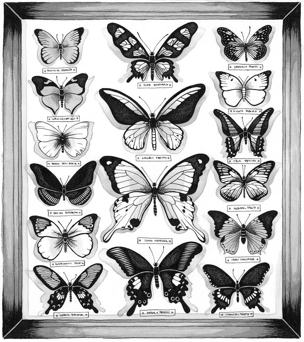 PinnedButterflies.jpg