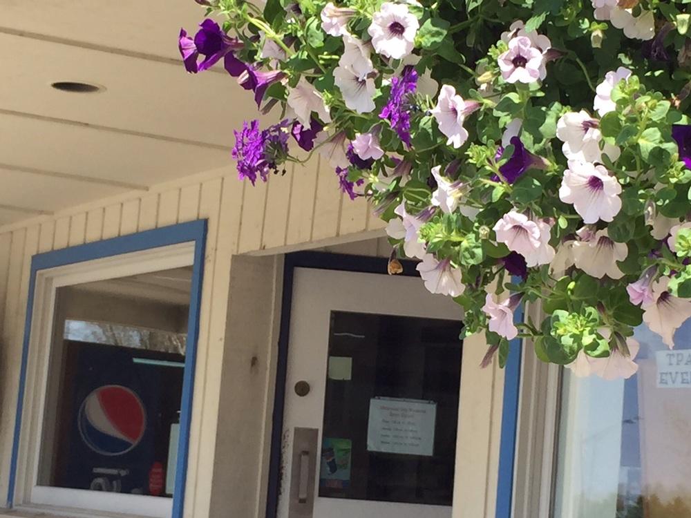 Love those purple petunias ...