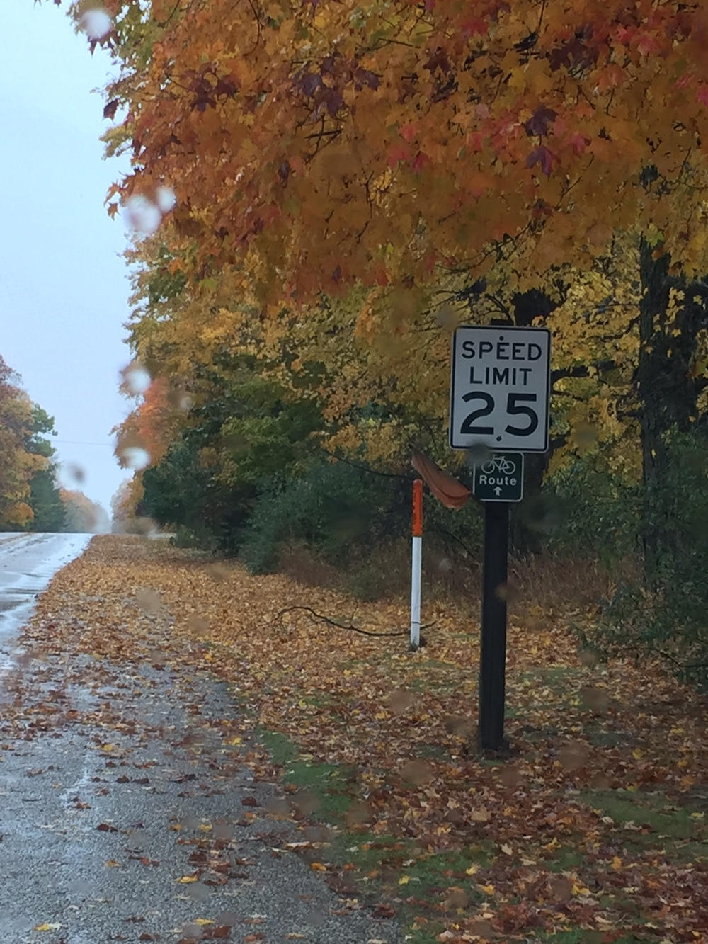 Along Main Road 2