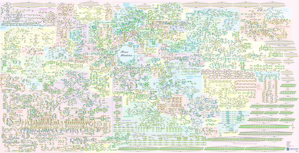 My favorite image on the internet: Click on the following link for a closer look at the complexity.   Recon 2, a virtual reconstruction of human metabolism