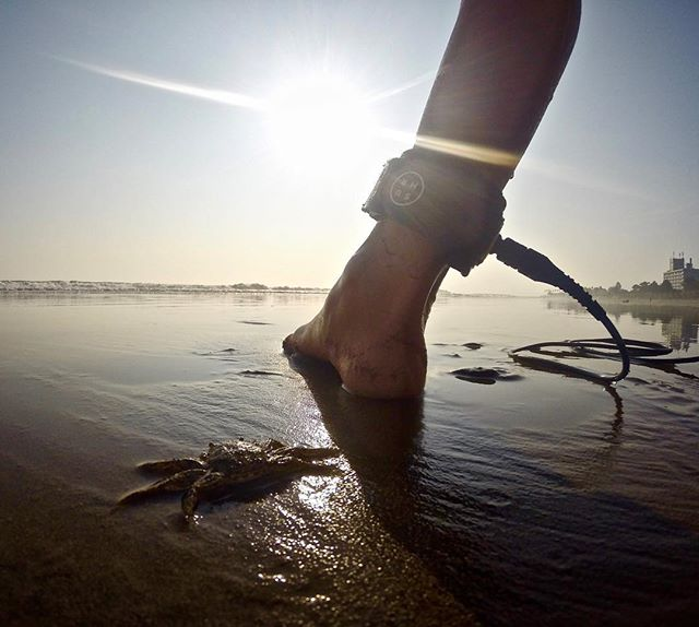 Crabs and cords . Aoshima . . #日本 #日本サーフ #サーフィン #日本サーフィン #宮崎 #宮崎サーフィン #宮崎サーフ #japan #japansurf #japancool #sea #sk8 #surf #surfer #japansunrise#oceans #openwater#optoutside #outdoorpassion #travelphotography #bmx #japansunset #yoga #wanderlust #grom #oceans #openwater #optoutside #mynikonstory