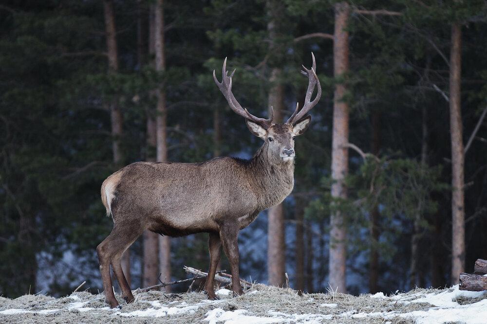 Extraordinary hunting experiences