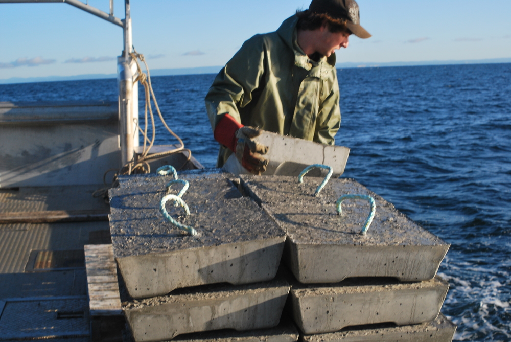Installation de récifs artificiels pour le homard