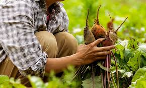 beet farmer.jpg