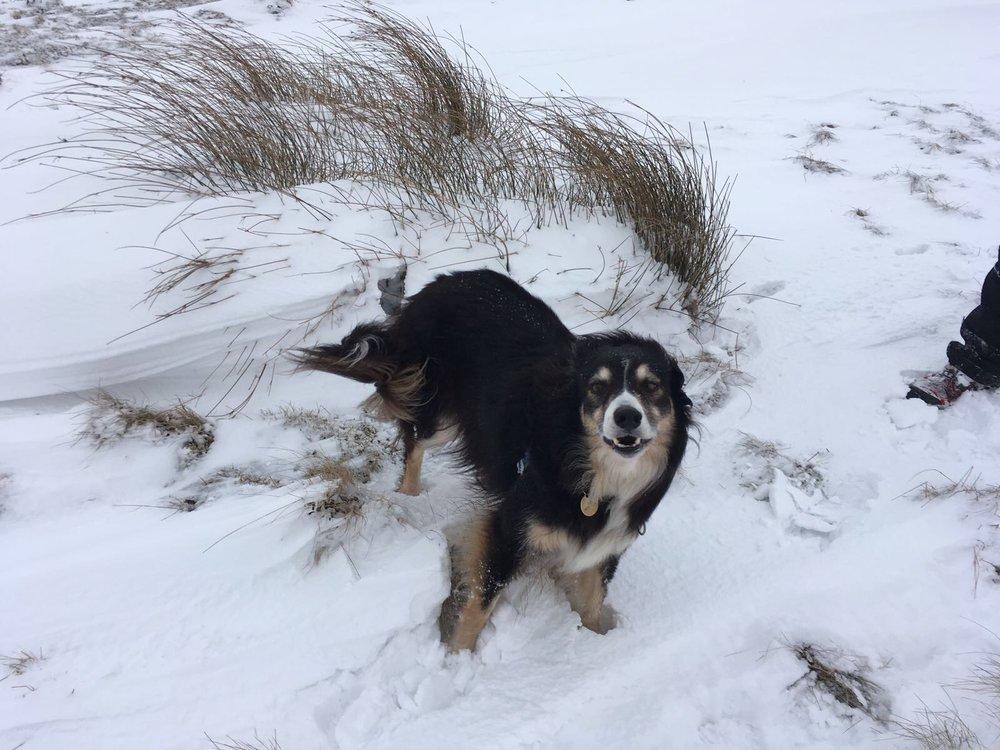 Tundra Zeb.