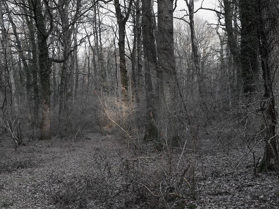 tree_004.jpg