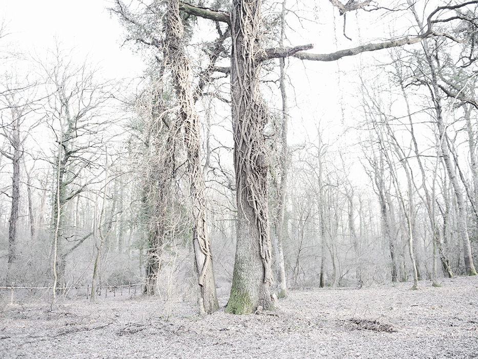 tree_007.jpg