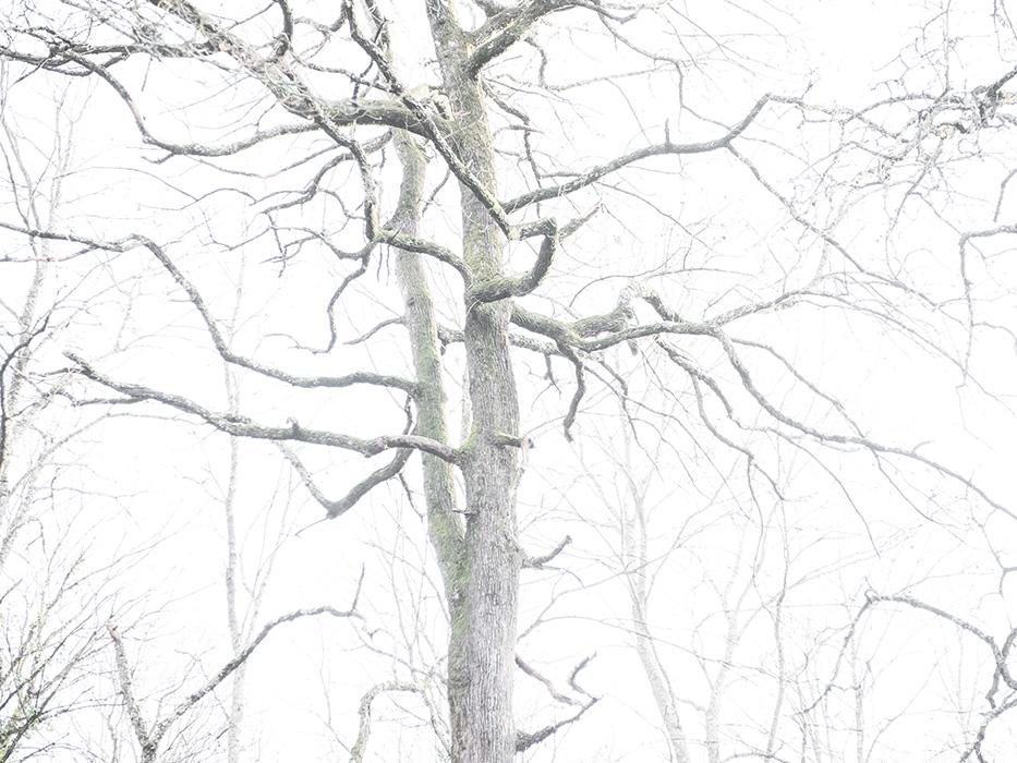 tree_011.jpg