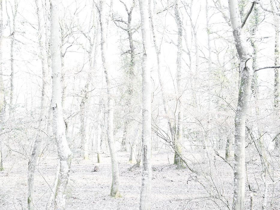 tree_012.jpg