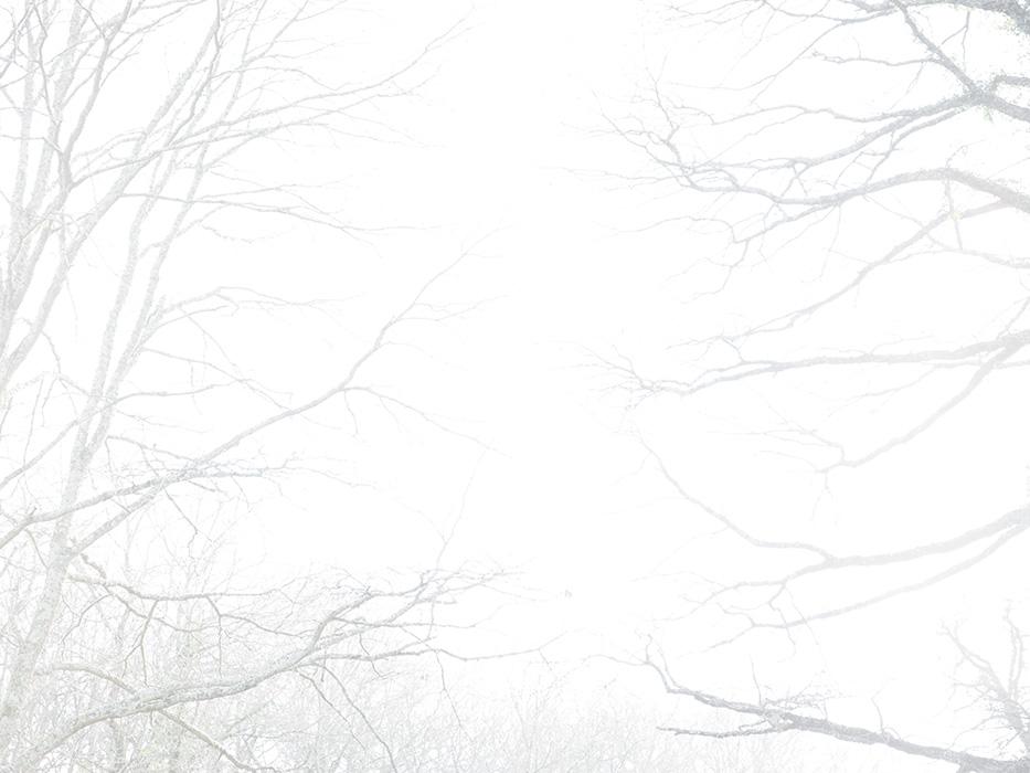 tree_014.jpg