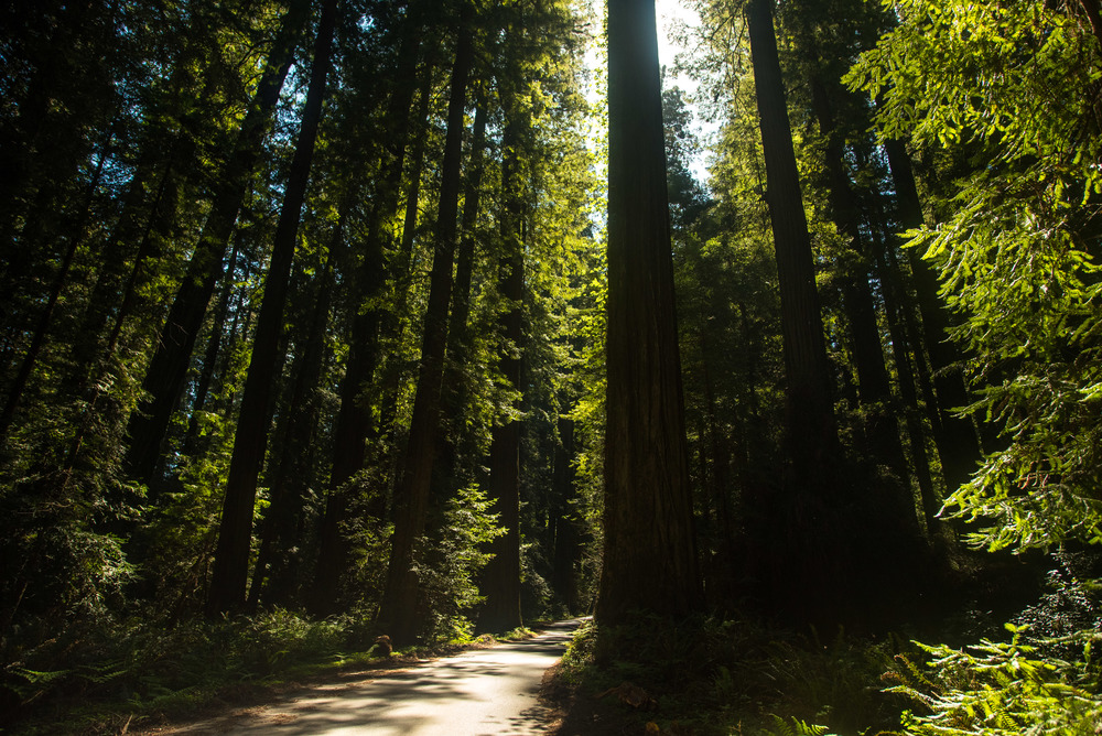 California-12.jpg