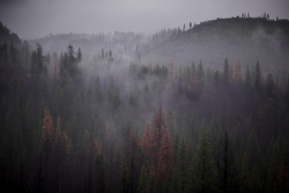 California-31.jpg