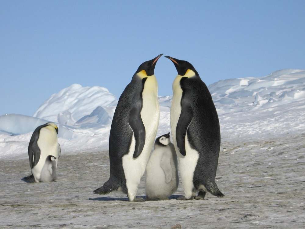 Click on the image above to find out more about our luxury extreme holidays to Antarctica.