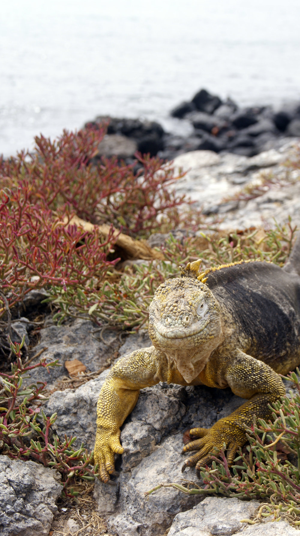 Click on the image above to find out more about our luxury wilderness holidays to the Galapagos Islands.