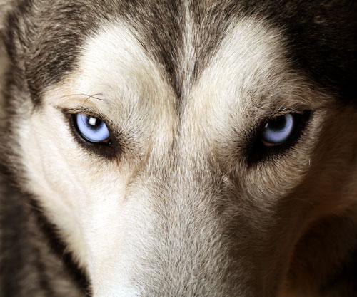 Tsitsikamma Wolf Sanctuary