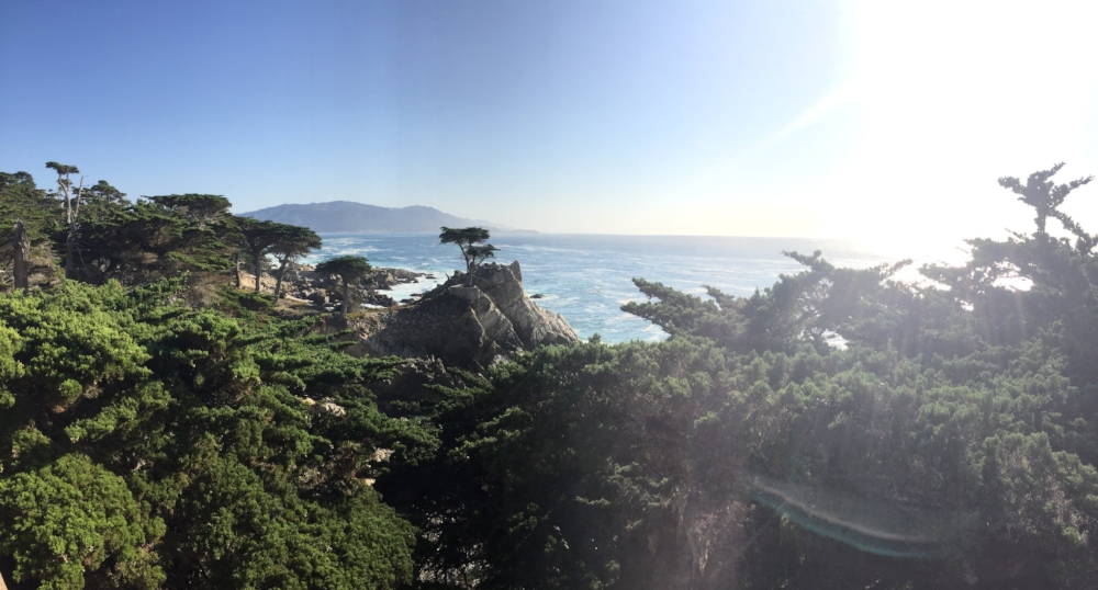 Lone Cyprus, 17 Mile Drive