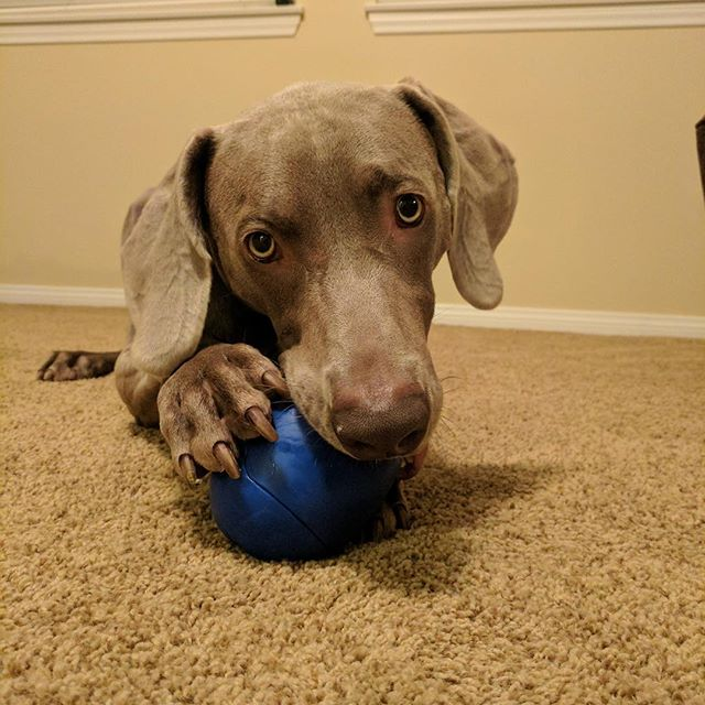 TIKR... this pups new favorite toy!